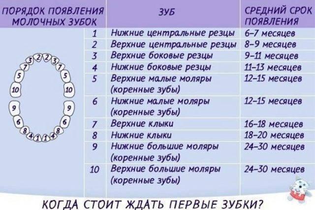 Последовательность, порядок роста зубов у детей. малышей - сроки, схема, возможные осложнения