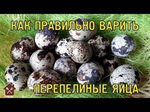 Как сварить перепелиные яйца правильно?
