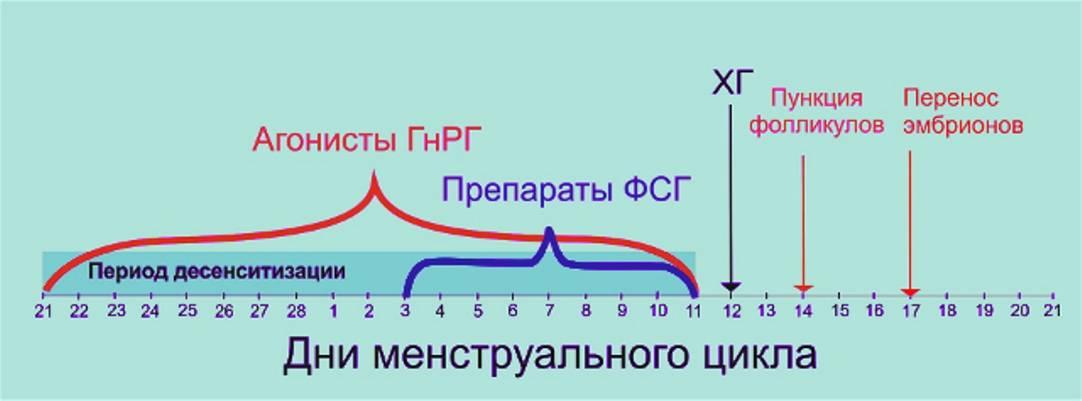Пункция яйцеклеток перед ЭКО: как происходит и на какой день цикла делают, как вести себя потом?