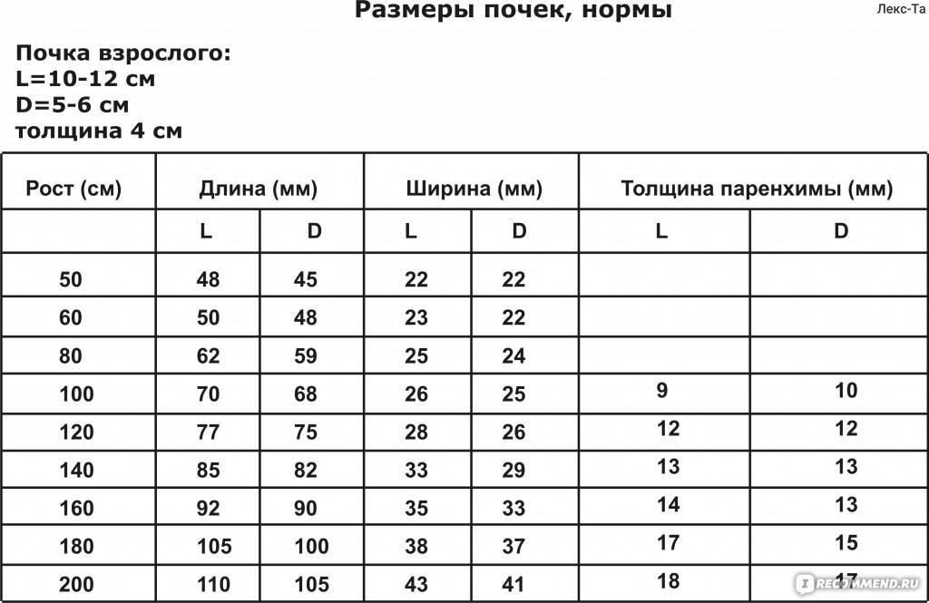 Какие размеры печени считаются нормой у взрослых, детей: таблица, квр