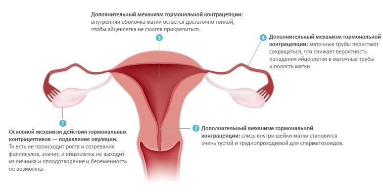 Беременность во время месячных - миф или реальность?