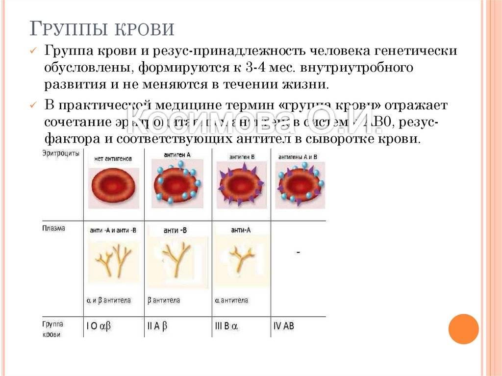 Какая группа крови будет у ребенка? можно ли определить по родительским данным?
