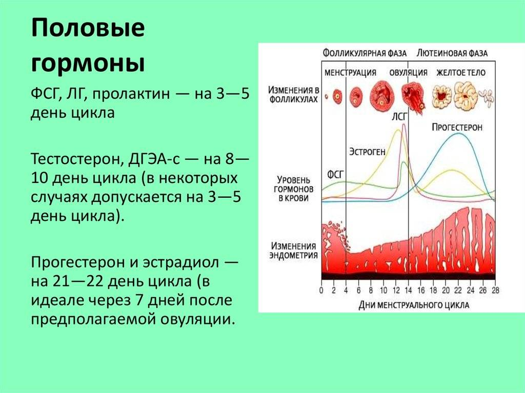 На какой день цикла сдавать эстрадиол и прогестерон женщине, каковы правила сдачи крови на гормоны?