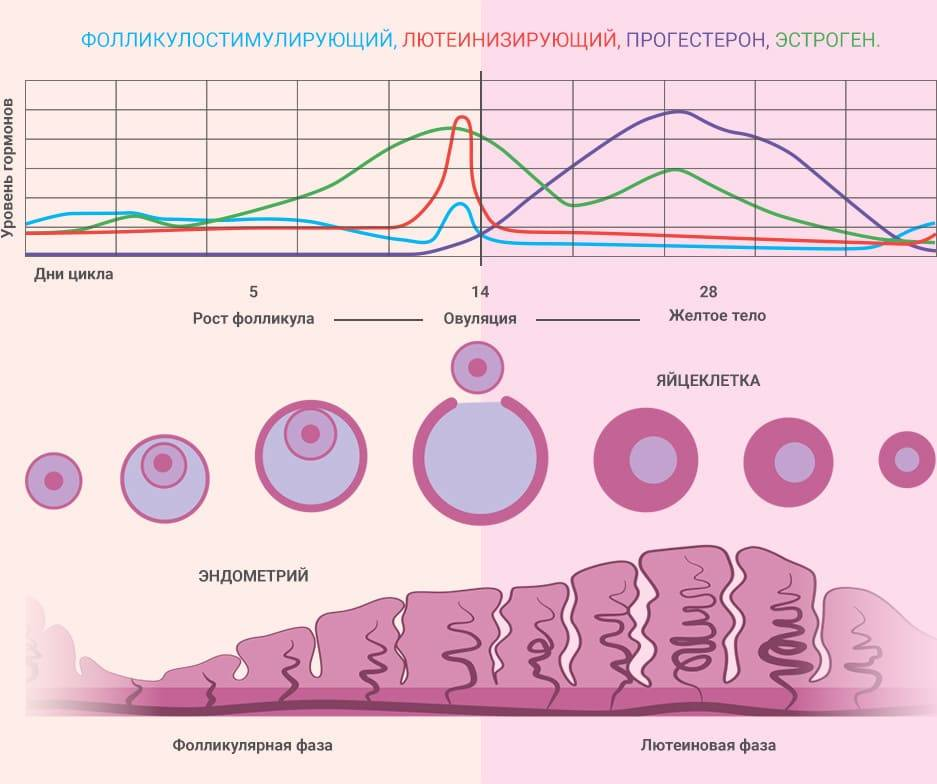 Как дефлорация влияет на месячные