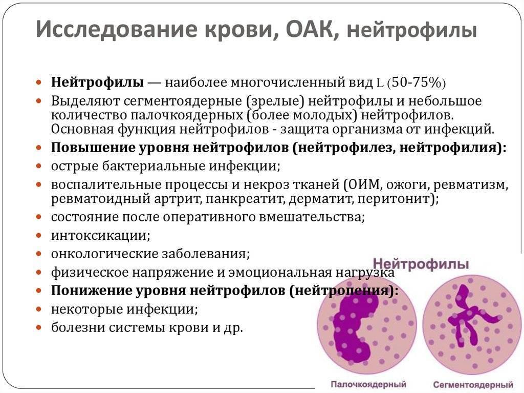 Общий анализ крови: полная расшифровка | медицинский центр ваше здоровье