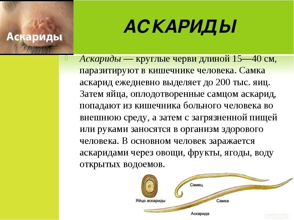Глистная инвазия - глисты у детей, лечение гельминтоза в ставрополе