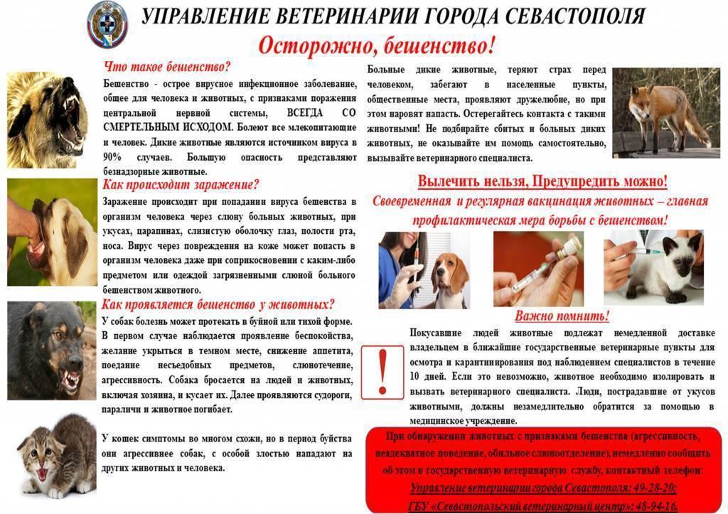 Укус собаки: первая помощь, правила лечения, опасные последствия