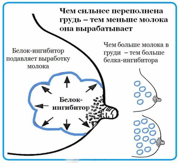 Как закончить кормление грудью по комаровскому