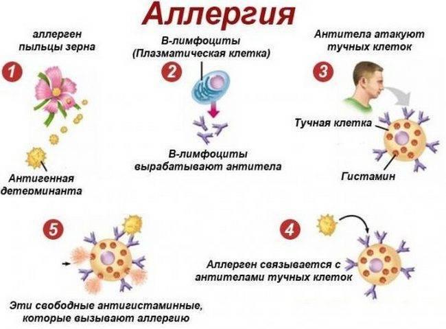 Температура при аллергическом рините