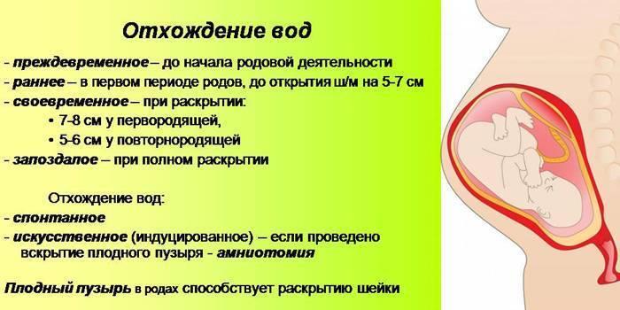 ᐉ сколько должна отходить пробка у беременных. какие бывают пробки перед родами? когда отходит и какого цвета пробка перед родами - ➡ sp-kupavna.ru