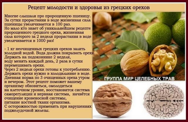 Грецкий орех – уникальный источник антиоксидантов и защитник сердца :: polismed.com