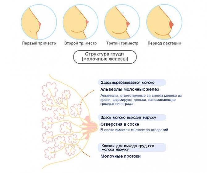 Набухание молочных желез у женщин: причины, лечение, профилактика