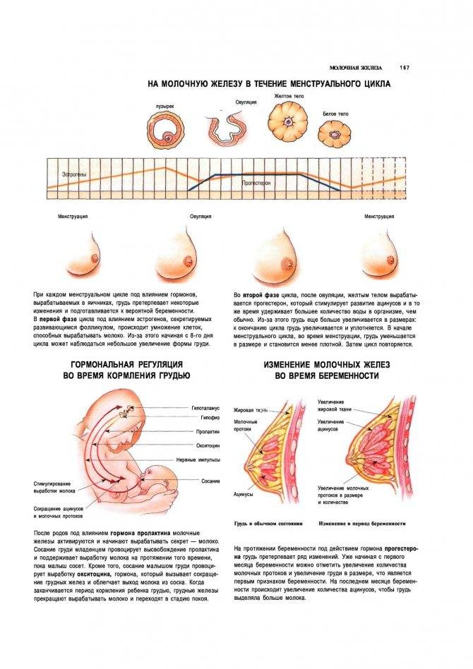 Когда начинает болеть грудь при беременности, причины боли в груди на раннем сроке     эко-блог