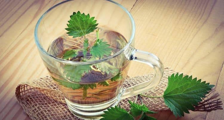 Лечение мастопатии травами и овощами   компетентно о здоровье на ilive