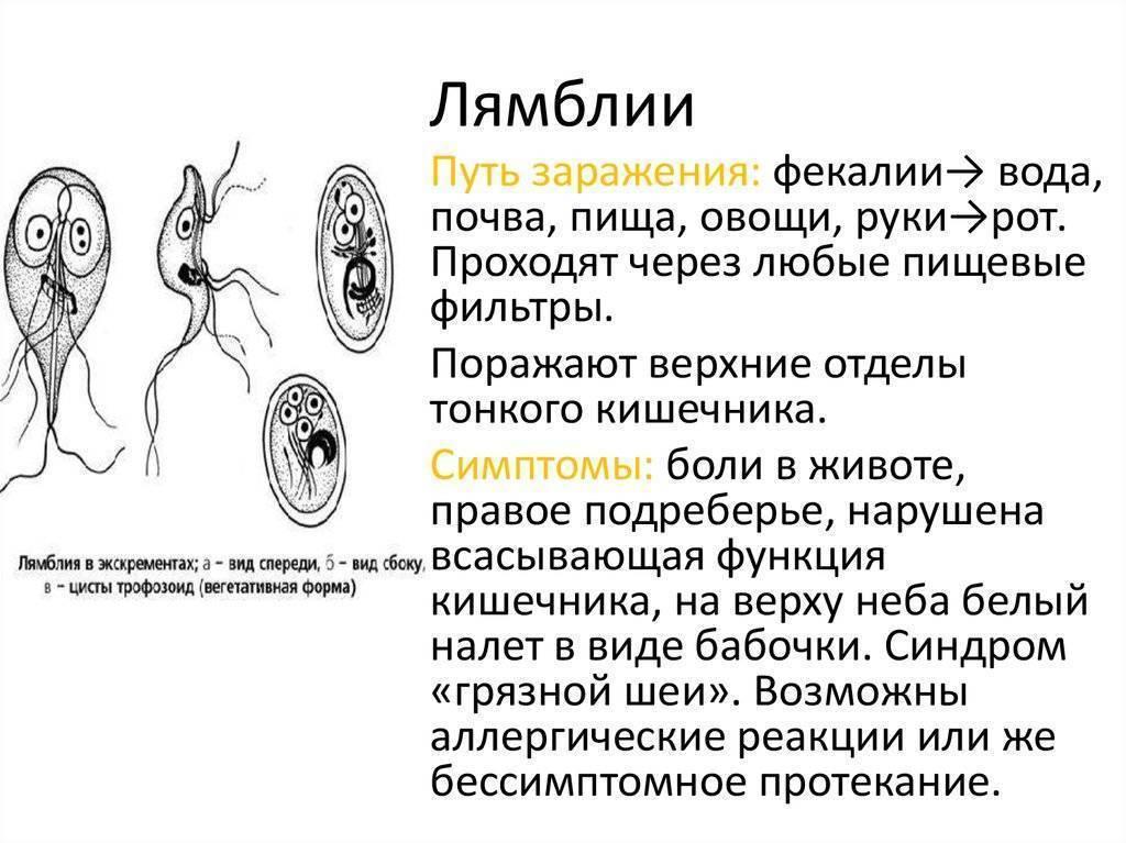 Лямблиоз — большая медицинская энциклопедия