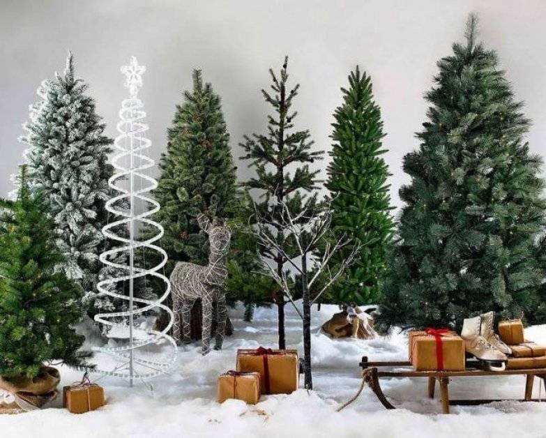 Что лучше: искусственная или натуральная елка? 5 правил, которые помогут сделать новый год экологичным