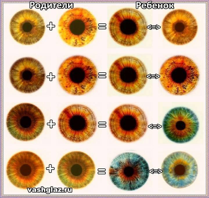 Как узнать цвет глаз будущего ребёнка
