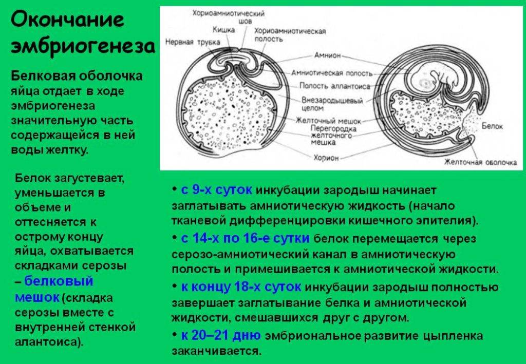 На какой день происходит имплантация эмбриона, сопровождающие её признаки