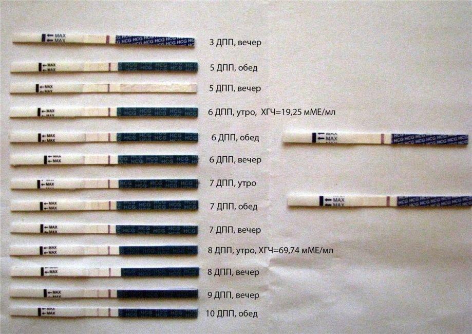 На какой день заполосатились тесты с 5и дневками: тест после эко