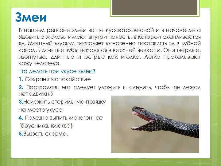 Первая помощь при укусе ядовитой змеи – блог – курсы первой помощи с plusodin.info