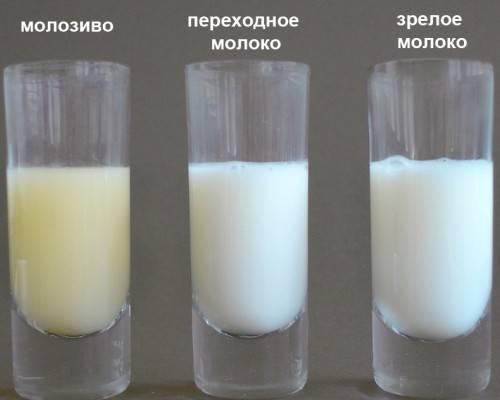 Как определить жирность грудного молока в домашних условиях