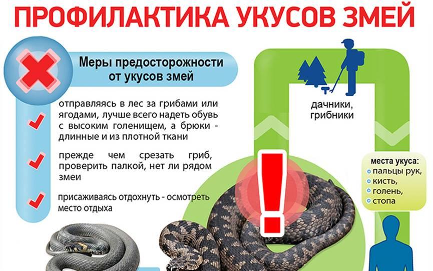 Первая помощь при укусе змеи: алгоритм оказания   food and health