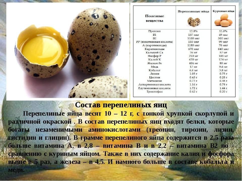 Сколько варить перепелиные яйца в кастрюле пароварке