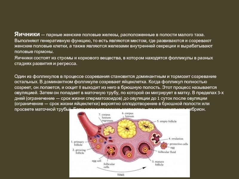Подготовка к пункции фолликулов в клинике gms эко