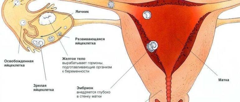Боли в яичниках при беременности | что делать, если болят яичники при беременности? | лечение боли и симптомы болезни на eurolab