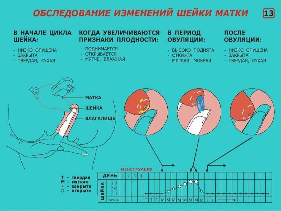 Как повысить вероятность зачатия - причины, диагностика и лечение