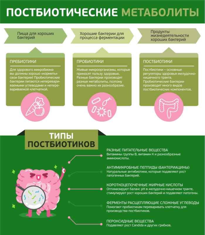 Можно принимать для профилактики? разбираем мифы опробиотиках