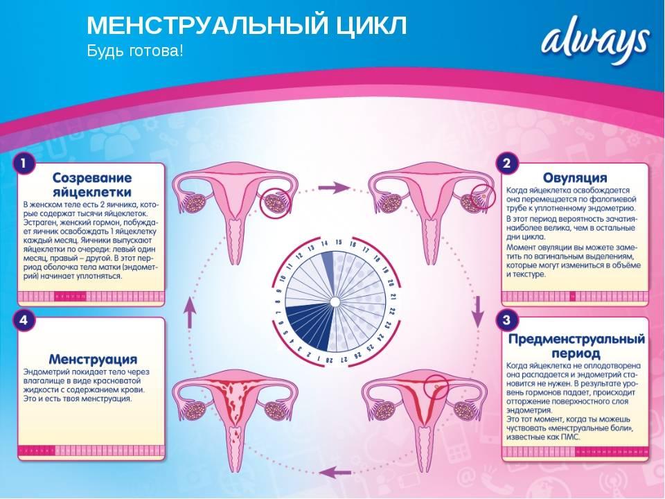 Норма менструации и причины нарушений | университетская клиника