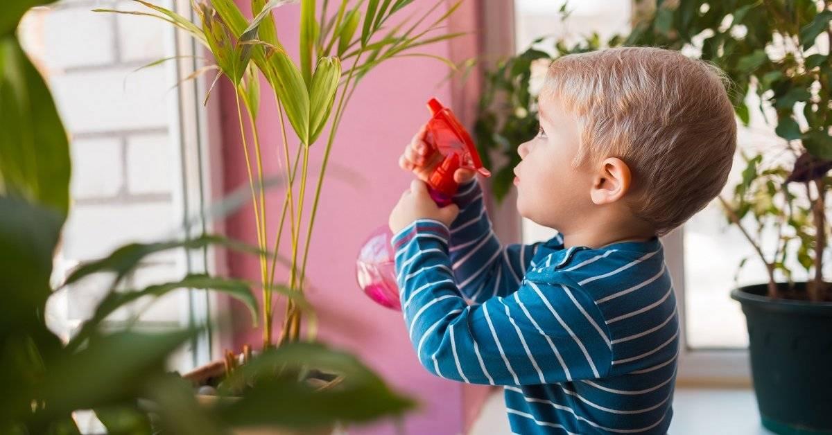 Цветы для детской комнаты: 13 лучших растений и 35 фото