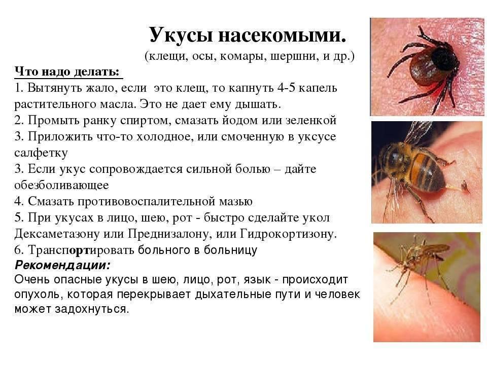 Чем лечить комариные укусы у грудничков - чем мазать, как обработать