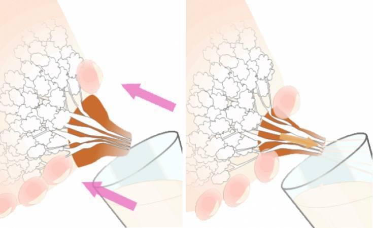 Как правильно сцеживать грудное молоко руками, массаж груди перед сцеживанием