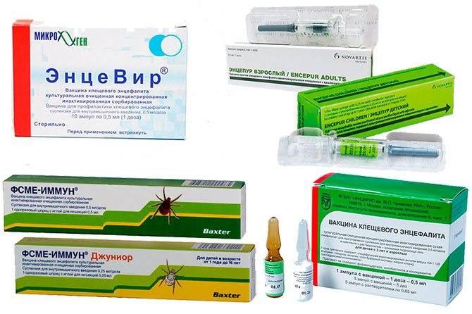 Вакцинация против клещевого энцефалита: схема планового введения вакцины, инструкция и противопоказания
