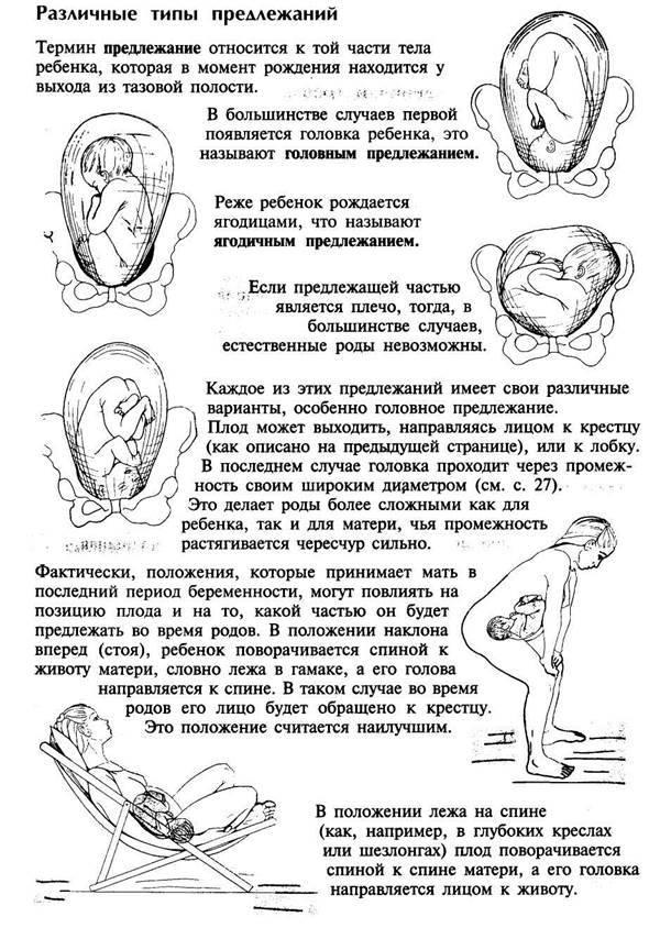 На каком сроке беременности ребенок переворачивается вниз головой и принимает окончательное положение в матке?