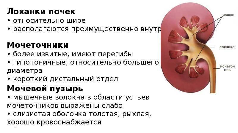 Гидронефроз у детей — лечение, диагностика, симптомы и причины болезни | николаев в.в.