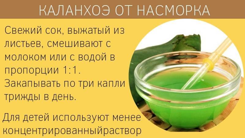 Рецепты приготовления капель из сока каланхоэ при насморке. - здоровье - медиаплатформа миртесен