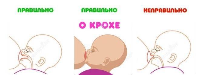 Подсказки для кормящих мам. правильное прикладывание кгруди