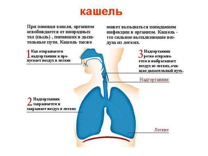 Здоровое и затрудненное дыхание: где между ними грань и когда нужна помощь