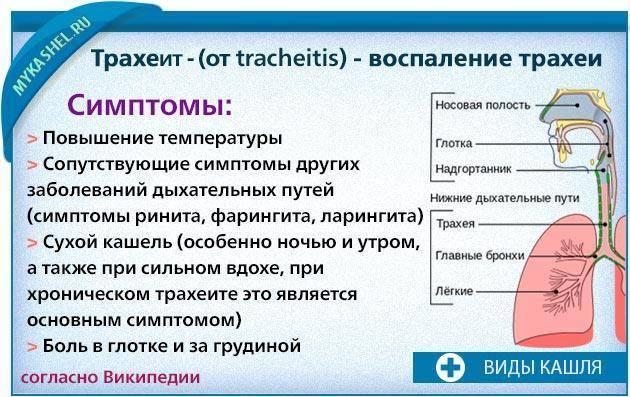 Трахеит у ребенка — симптомы острого, хронического заболевания