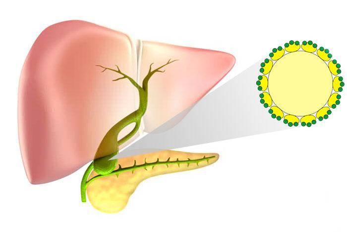Атрезия ануса и прямой кишки у детей — лечение, диагностика, симптомы и причины болезни | николаев в.в.