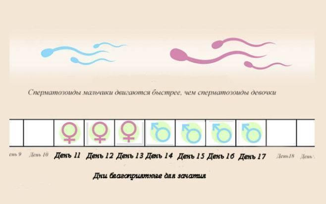 """Беременность с одной трубой: что нужно знать? - семейный медицинский центр """"лейб медик"""""""