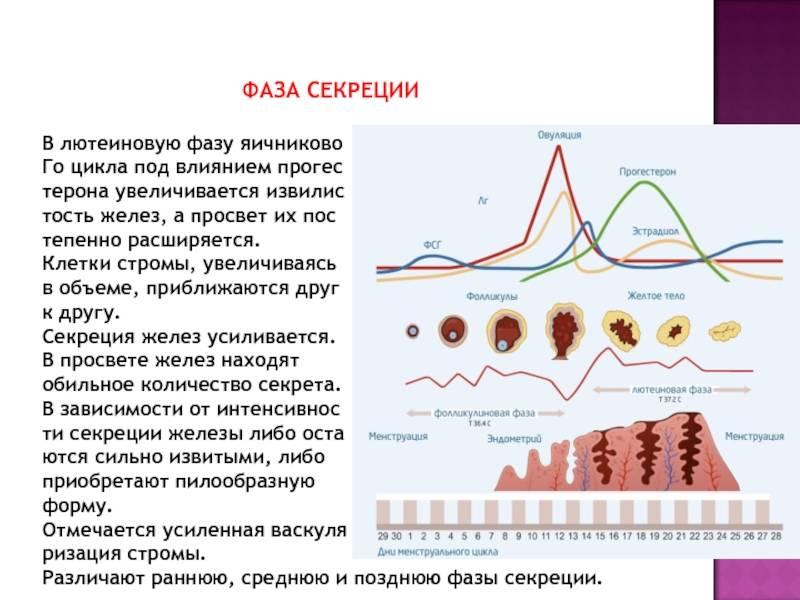 Повышен прогестерон в лютеиновой фазе: причины и способы нормализации