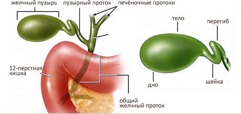 Перегиб (загиб) желчного пузыря: симптомы и лечение у ребенка и взрослого - medside.ru
