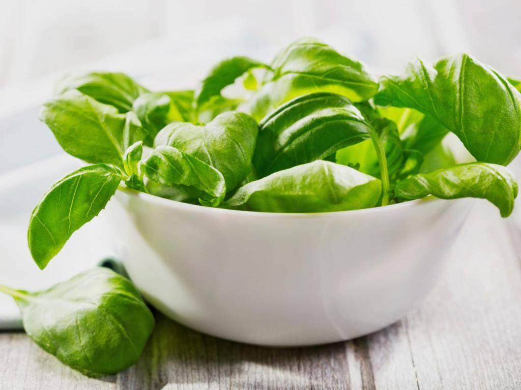 Зелень при панкреатите: какую можно и какую нельзя?   компетентно о здоровье на ilive