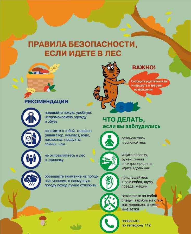 Что делать, если заблудился в лесу: памятка для детей и взрослых