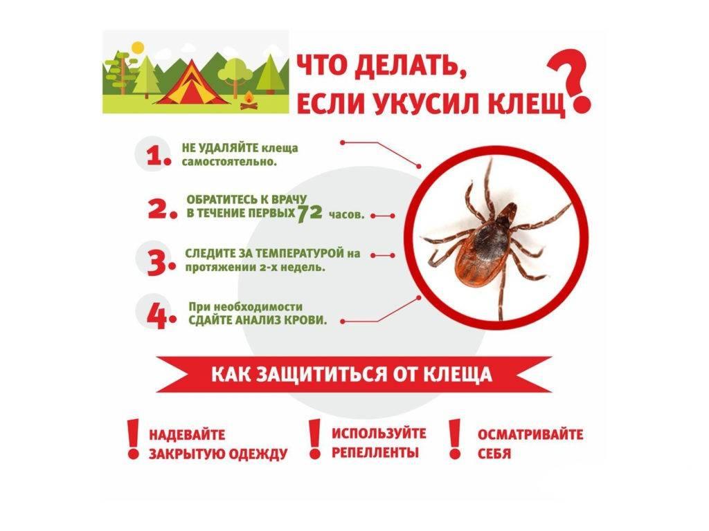 Клещевой энцефалит у детей - симптомы болезни, профилактика и лечение клещевого энцефалита у детей, причины заболевания и его диагностика на eurolab