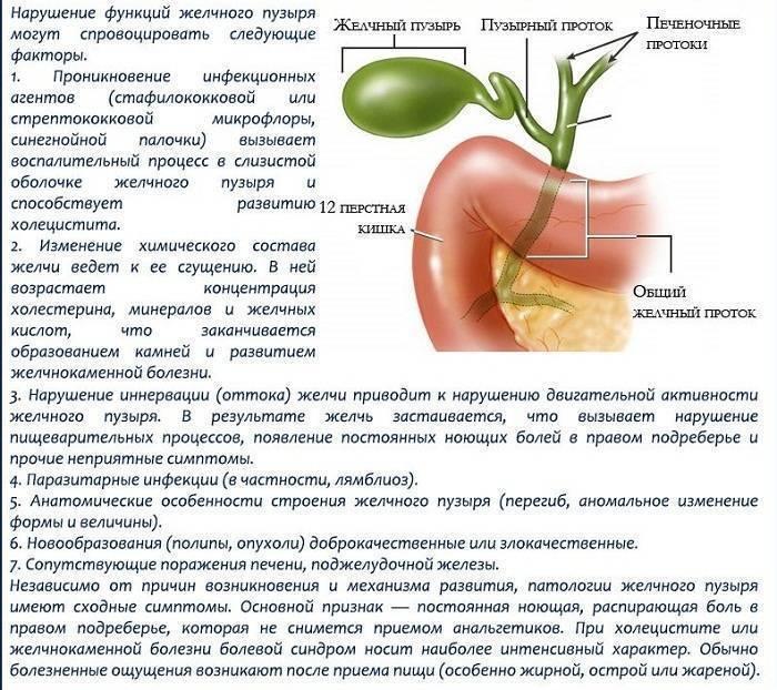 Холецистэктомия — удаление желчного пузыря, порядок проведения и показания